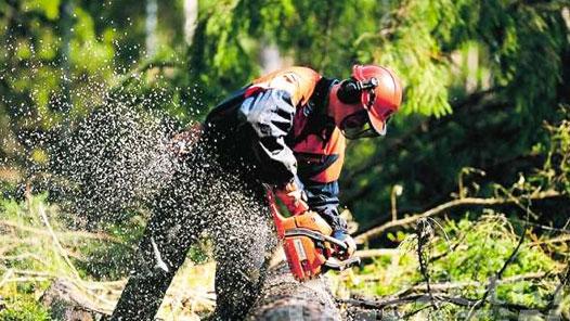 lavori-forestali
